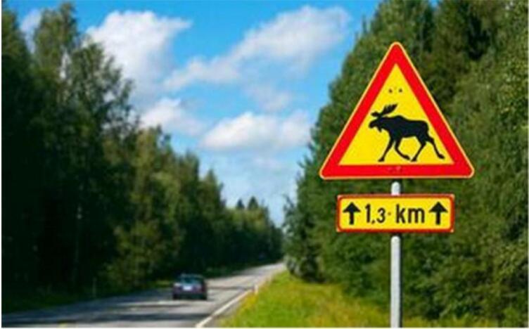 这个堪称极致的汽车测试,居然是被鹿给逼出来的!你知道吗?